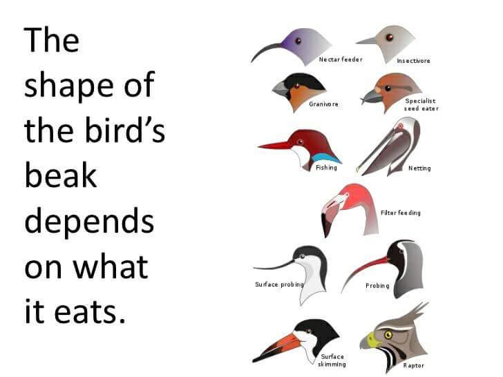BirdBills